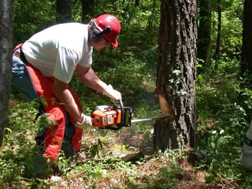Tree Contractors Knuston
