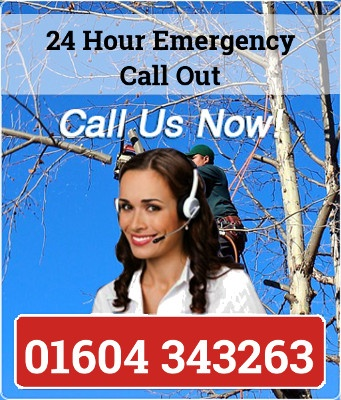 Tree Surgeon Northampton call now